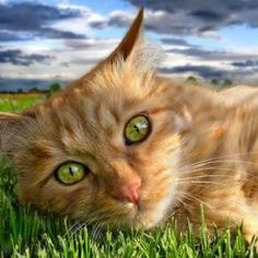 """In my world, the grass is green, the sky is ue, and all cats are orange."" --Jim Davis (Creator of ""Garfield"")"
