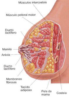.:: Corpo Feminino - Só Biologia ::.