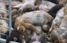 Sign: Stop Sickening School 'Possum Hunt' Where Children are Encouraged to Kill