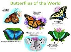Butterflies of the World Tee Morpho Butterfly, Blue Morpho, Monarch Butterfly, Mon Zoo, Animals Of The World, Butterflies, Explore, Nature, Photos