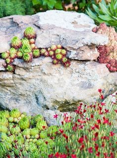 Decorating boulder with succulents