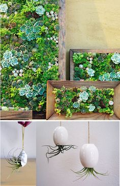 Planter, garden in a frame, vertical garden