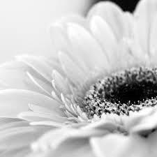 botanical prints black and white - Google Search