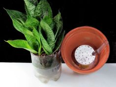 Inside gardening with Bubble Sips (sub irrigated planter) - inside urban green blog