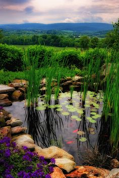Hillsborough Vineyard Pond...  ...Purcellville.... VIRGINIA