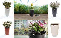 The flowerpot that tends to your plants while you're away! The Parrot Pot is a smart flowerpot that helps your plants flourish. The self-watering system and four built-in sensors monitor your plant around the clock. It's gardening made easy!  Der smarte Blumentopf, der Ihnen bei der Pflege Ihrer Pflanzen hilft. Er funktioniert mit einem intelligenten Gießsystem und 4 Sensoren, die die Bedürfnisse Ihrer Pflanze fortlaufend analysieren. Handy Case, Self Watering, Flourish, Flower Pots, Parrot, Make It Simple, Monitor, Clock, Gardening