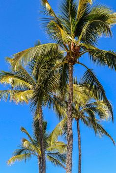 """Happy palms"" Photograph by Emily Byers"