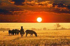 Pôr do sol nas savanas da África