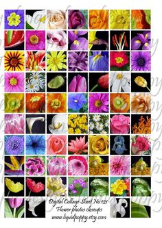 Instant Download of Digital Collage Sheet No 121 1x1 Inch Square Flower Closeups Inchies for Scrabble Tiles Jewelry or Stickers