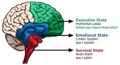 Conscious Discipline Brain State Model - Conscious Discipline