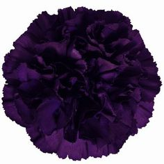 FiftyFlowers.com - Blackish Purple Carnation Flowers, don't even look like carnations, love the deep delicious color.