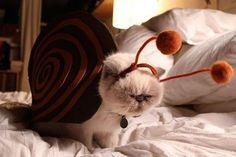 it's a snail!!!!