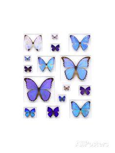Cerulean Butterflies Fotografie-Druck von Christopher Marley bei AllPosters.de