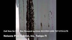 Tampa Bee Exterminator