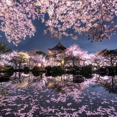 To-ji temple is one of the most famous Sakura places in Kyoto. On the night, the fallen petals were so beautiful and the pond reflected everything on around it. Sakura Wallpaper, Fotos Wallpaper, Beautiful World, Beautiful Places, Beautiful Pictures, Wonderful Places, Beautiful Scenery, Amazing Places, Cherry Blossom Japan
