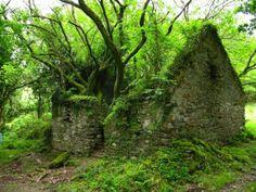 El Sendero de Kerry Way entre Sneen y Kenmare en Irlanda. La madre tierra poco a poco va ganando terreno…