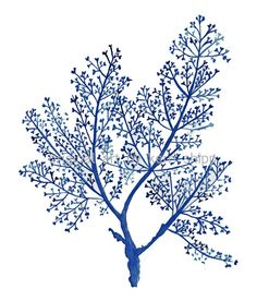 Sea Fern in Denim Print by driftwoodinteriors on Etsy