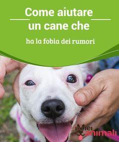 Come aiutare un cane che ha la fobia dei rumori Anche se la #fobia dei #rumori viene associata quasi sempre ad un #trauma subito, non è così nel 100% dei casi, come ci viene spiegato dai #veterinari. #Consigli