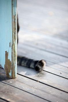 Kat om het hoekje