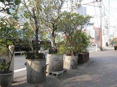 Sidewalk garden with huge soup pots as planters. Shibaura, Tokyo.