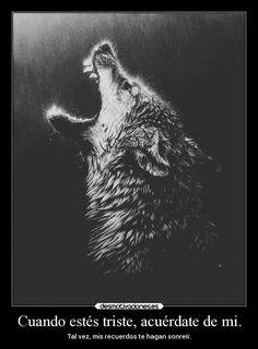 lobos con frases tristes - Buscar con Google