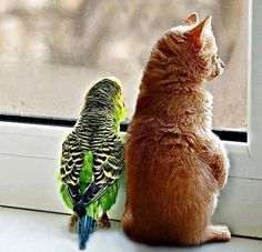 the parrot and the pussycat?