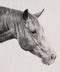 horse pencil portrait - Google Search
