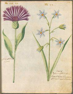 Hortulus Monheimensis 00055