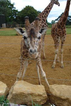 Kellyjo's baby friend from Cotswolds Wildlife Park