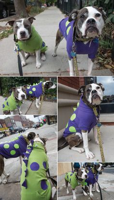 Two Pitties in the City: Halloween Costume Guide: Making Dinosaur Costumes from Dog Hoodies