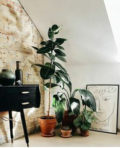 Living Room Plants Decor, Home Living Room, Flat Interior, Interior Design, Hipster Living Rooms, Different House Styles, Hipster Home Decor, Home Nyc, Studio Apartment Decorating