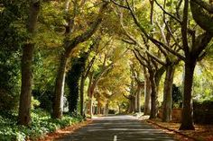 Constantia road lined with trees, Cape Town Lush Garden, Terrace Garden, Wonderful Places, Beautiful Places, Heart Place, Noise Pollution, Cape Town South Africa, Pretoria, Africa Travel