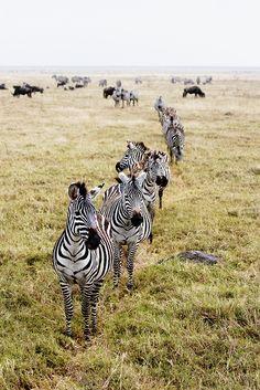 curtiscsmith:  Ngorongoro Crater, Tanzania, Africa - 2007