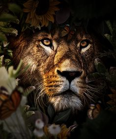 Wild Animal Wallpaper, Nature Wallpaper, Animals Beautiful, Cute Animals, Lion King Pictures, Tier Wallpaper, Animal Graphic, Lion Art, Cute Patterns Wallpaper