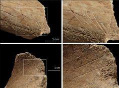 Cut marks possibly made by neandertals. 35.000 BP - Cova de les Teixoneres, Barcelona Spain