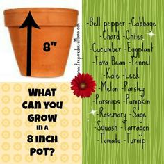What herbs and vegetables can you successfully grow in an 8 inch pot? Why quite a lot! PreparednessMama