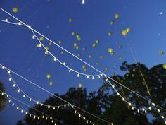 #Multiplicity #Celebration #Life #Balloons #Happy Garden Venue, Outdoor Venues, Event Venues, Celebration, Balloons, Mountains, Happy, Travel, Life