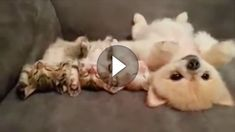 Kaum etwas wirkt so beruhigend, wie kleine schlafende Kätzchen, oder?! Dieser kleine Hund denkt sich vermutlich das selbe und bleibt deshalb ganz still...