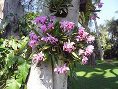 Orchids at Las Mananitas. Epiphytes are 'air plants' that live on hosts such as trees.