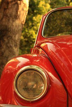 #VW Bugs