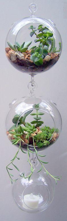Terrarium Glass Hanging Double Hook with Succulents Dorm Room Accessory DIY.