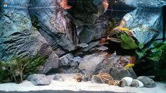 Unique 3D aquarium backgrounds - Aquadecor