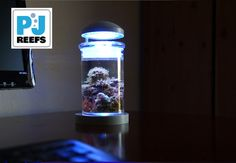 Simple yet beautiful and elegant design for desktop or any table. Smallest and most affordable salt water aquarium! Enjoyable to look and take care of and gives a relaxing vib! Also very easy to maintain!