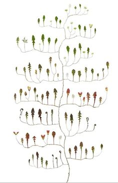Lotta Olsson @ the art room plant