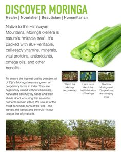 Moringa - The Miracle Tree Natural Cures, Natural Healing, Health And Beauty, Health And Wellness, Health Care, Moringa Benefits, Health Benefits, Miracle Tree, Alternative Health