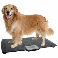 Portable Pet Weight Scale High Accuracy Precision Digital Pet Scale Black New  #PortablePetWeight
