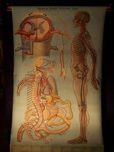 Old Anatomical Teaching Chart.