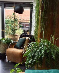 """nuevo-interiordesign on Instagram: """"🎄Dit jaar hebben we een Ceder boompje als kerstboom💚 Fijne Zondag allemaal 🎄. #ceder #kerstboom #kerst #groeninhuis #interieurinspiratie…"""""""