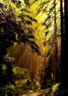 Mystical Forest, Ukraine