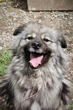 DOM na stałe dla psiaka z chłoniakiem złośliwym